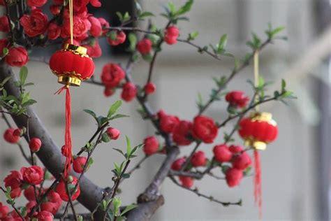 hong kong chinese  year flower markets