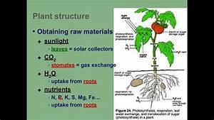 Intro To Photosynthesis  Part I