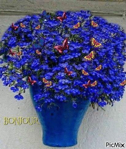 Flowers Lobelia Flores Garden Pot Bleu Azul