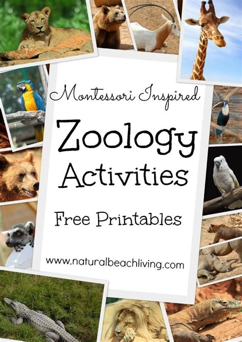 montessori inspired  printable zoology pack