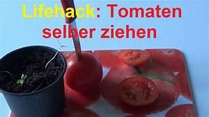 Tomaten Selber Ziehen : lifehack tomatenscheiben einpflanzen tomaten selber ziehen youtube ~ Whattoseeinmadrid.com Haus und Dekorationen