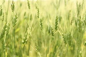 Study shows importance of European farmers adapting to ...