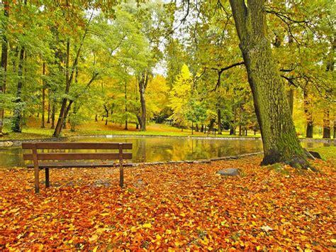 autunno parco con alberi di foglie foglie colorate di aspen acero e castagno coperti di terra