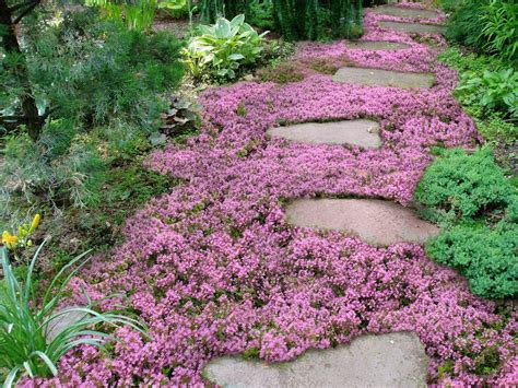 low growing ground cover live mulch how to plant sweet and low flowering ground cover youtube