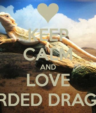 4k wallpapers of dragon for free download. Free download Bearded Dragon 450x568 for your Desktop, Mobile & Tablet   Explore 44+ Funny ...