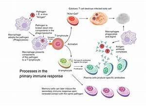 The Immune Response To Sars