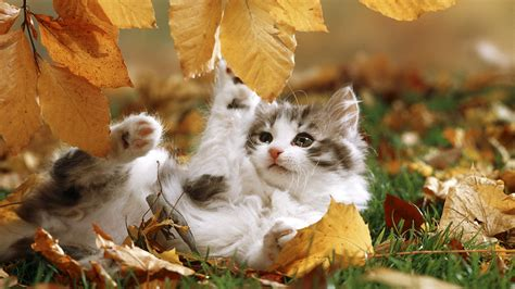 Wallpaper Cats Animals - playtime hd wallpaper background image 1920x1080 id