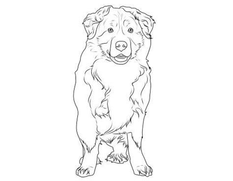 kostenlose malvorlage hunde berner sennenhund zum ausmalen