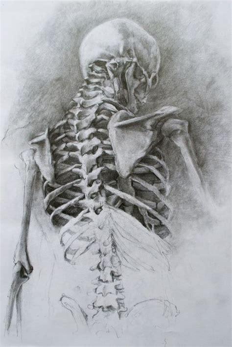 Tumblr Art Pinterest Anatomy