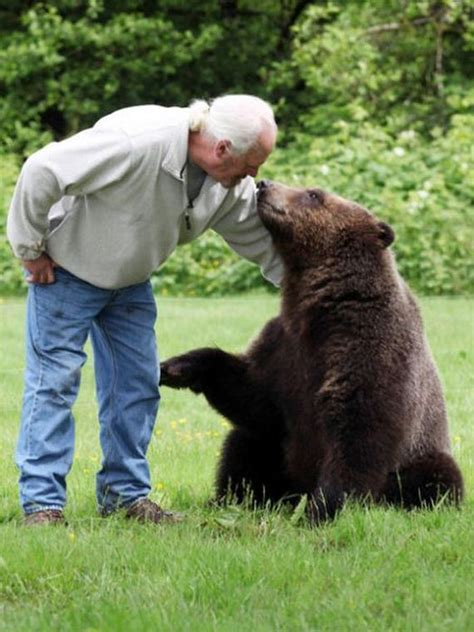 pet grizzly bear barnorama