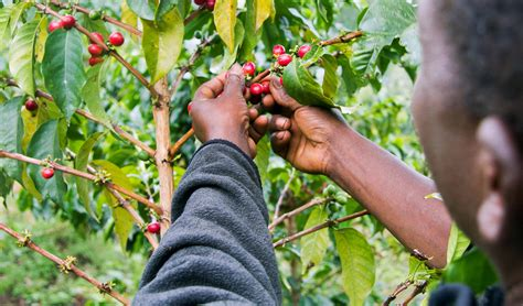 kenya technoserve business solutions  poverty