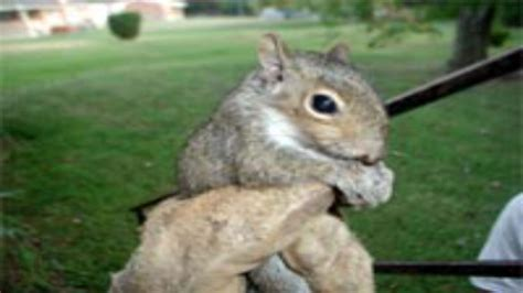 techniques for squirrel removal in columbus oh for