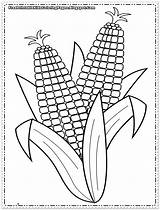 Corn Coloring Pages Printable Cob Sheets Indian Colouring Sheet Template Printables Autumn Preschool Flower Ears Popular Coloringhome Put sketch template