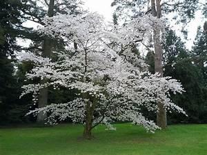 Welche Bäume Blühen Jetzt : womo urlaub tag 10 ~ Buech-reservation.com Haus und Dekorationen