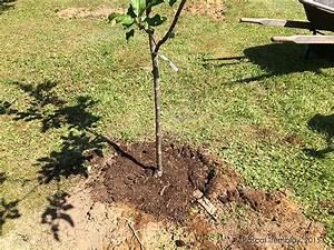 Quand Planter Un Pommier : tailler un pommier comment tailler un pommier etapes ~ Dallasstarsshop.com Idées de Décoration