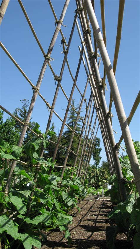 Vertical Supports In The Vegetable Garden  Harvest To Table