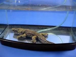 Crocodile Bubbles Aquarium Ornament Decor goaqua88 - YouTube