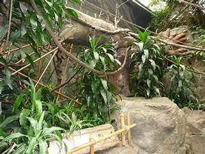 Omaha's Henry Doorly Zoo - Lied Jungle » Omaha's Henry ...