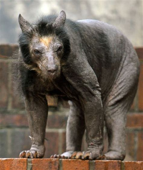 animals  fur  totally