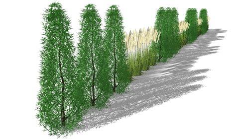 immergrüne bepflanzungen am gartenzaun sichtschutzkombination mit s 228 ulenhainbuche und miscanthus