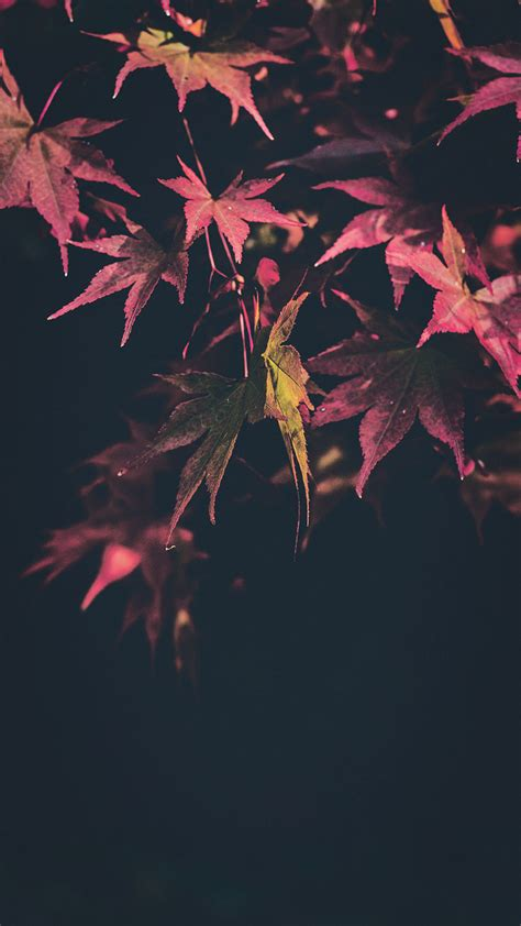 Aesthetic Fall Wallpaper Iphone Xr by Fresh Aesthetic Wallpapers For Iphone Xs Max Wallpaper