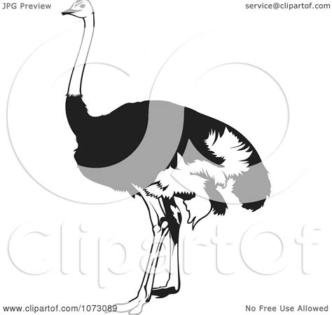 free royalty free clipart clipart black and white emu bird royalty free vector