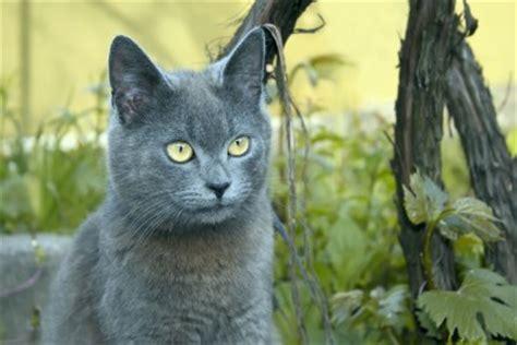 petcyclopedia   cats spray urine