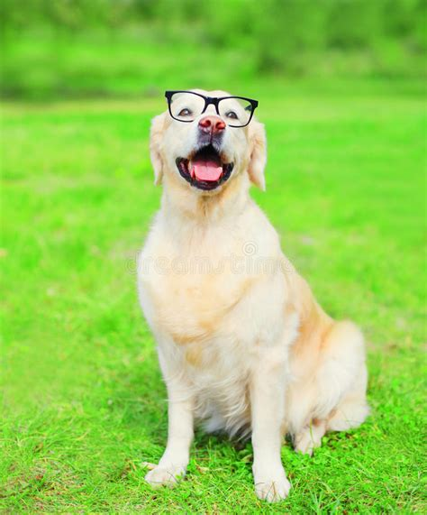 doggy vision stock image image  cute black optical