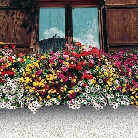 Balkonpflanzen Pflegeleicht Robust by Sortiment Bunter Kasten Sommerblumen Sortimente