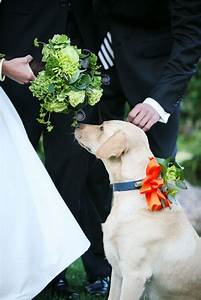 94 best dogs in weddings images on pinterest wedding With dog wedding ring