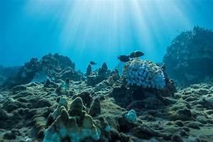 World Oceans Day Photo Journal