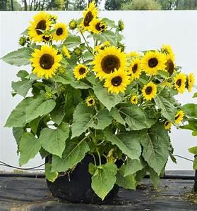 The best varieties for container gardening « Gardens Alive ...