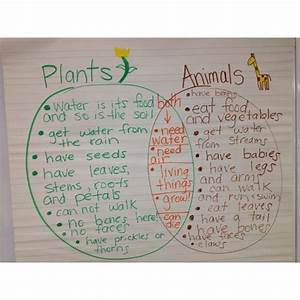 Comparing Living Things  Plants And Animals Venn Diagram Greenbeankinderga