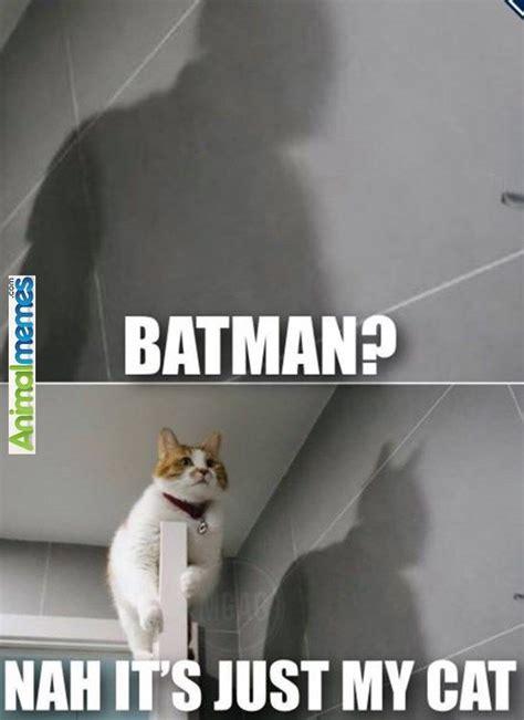 Fuck You Cat Meme - 17 best ideas about cat memes on pinterest funny cat