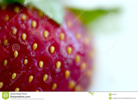 zoom   strawberry stock image image  field close