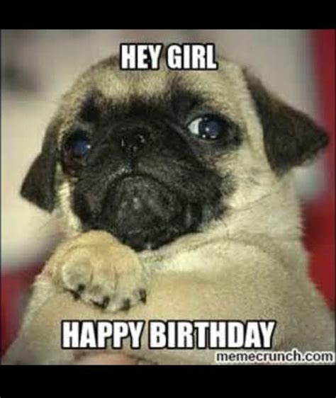 Birthday Pug Meme - 135 best images about birthday on pinterest happy birthday wishes 30 birthday quotes and cute
