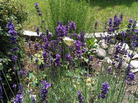 Schmetterlingsgarten Anlegen  Der Wohnsinn
