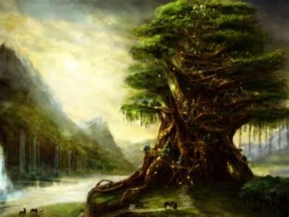 Tree Wallpapers Desktop Nature Mobile Widescreen