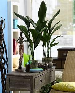 Zimmerpflanzen Für Wenig Licht : 10 zimmerpflanzen die wenig licht brauchen ~ A.2002-acura-tl-radio.info Haus und Dekorationen