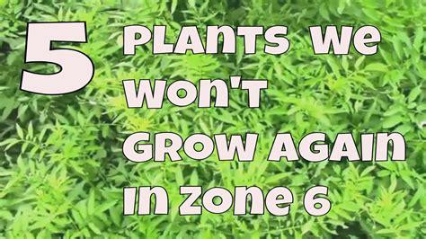 zone plants grow again won