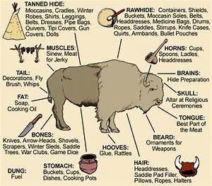 Uses Of The Buffalo