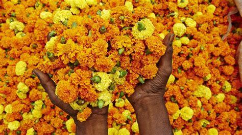 do marigolds keep bugs away do marigolds keep bugs away reference com