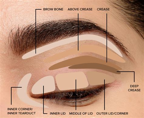 Diagram For Eye Makeup by How To Blend Eyeshadow Tips Tricks The Makeup List