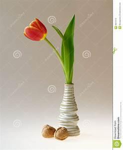 Einzelne Blume Vase : einzelne tulpe im vase stockfoto bild von fr hling wachsen 39570110 ~ Indierocktalk.com Haus und Dekorationen