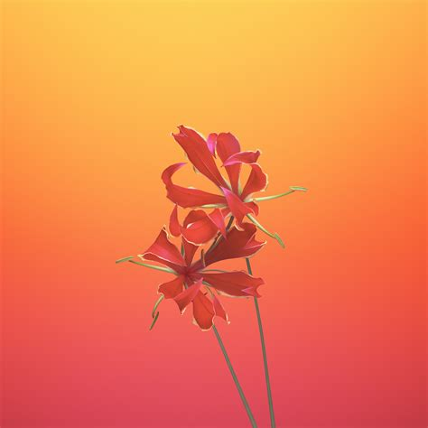 Wallpaper Iphone X Wallpapers, Iphone 8, Ios11, Flower