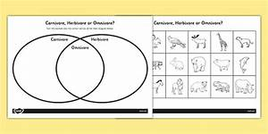 Venn Diagram Worksheet Ks1