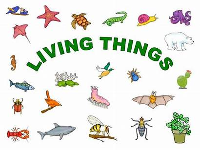 Living Things Clipart Powerpoint Presentation Ppt Tree