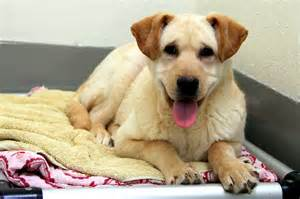 San Francisco SPCA Dogs