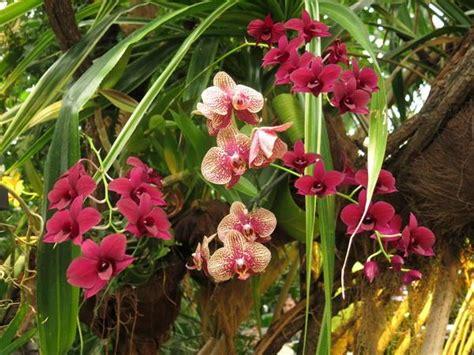 Blumen Und Pflanzen Das Ganze Jahr über
