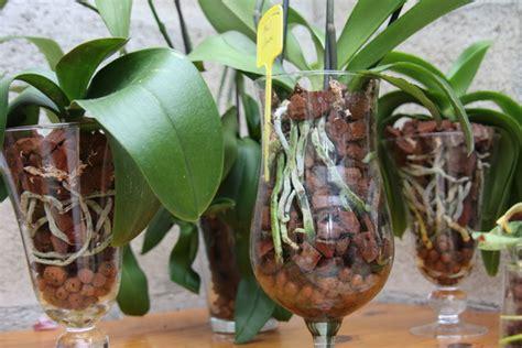 arrosage orchidee en pot orchid 233 es culture en pot de verre